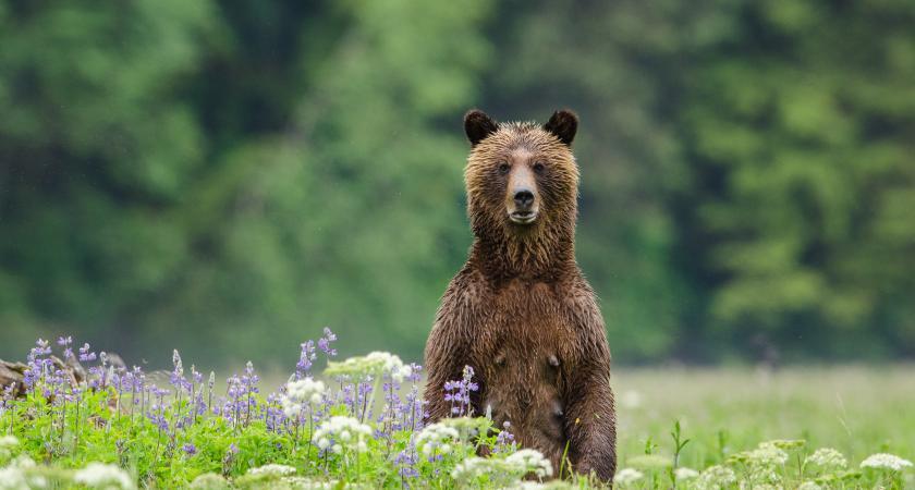 Dans la forêt de l'ours esprit 3D